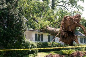 Storm Damage Pocatello